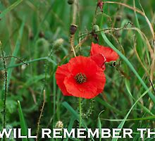 REMEMBERANCE DAY POPPY by PETED60