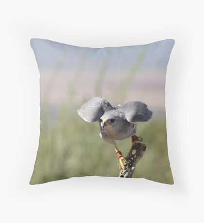 """Encouragement"" Grey Hawk, Raptor Throw Pillow"