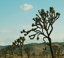 joshua trees, california in the summer by mellychan