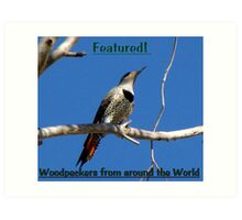 Northern Flicker (Red-shafted) ~ Female (Banner) Art Print