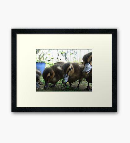 The velociraptor gang Framed Print