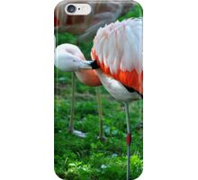 Now Where Did I Put That Other Leg...I Know It Is In Here Somewhere... iPhone Case/Skin