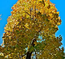 Autumn - great color palette. by Brown Sugar . Views ( 97 ) Thanks ! :-)) by © Andrzej Goszcz,M.D. Ph.D