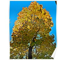 Autumn - great color palette. by Brown Sugar . Views ( 97 ) Thanks ! :-)) Poster