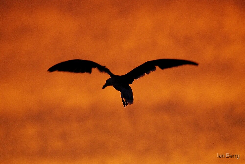 Silhouette by Ian Berry