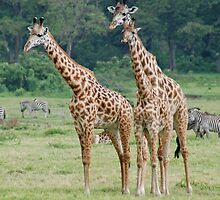 Three's a Crowd - Arusha National Park, Tanzania, Africa by Adrian Paul