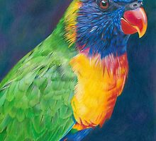 Rainbow Lorikeet by Karen  Hull