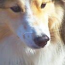 Lassie by Judi Taylor