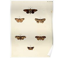 Exotic butterflies of the three parts of the world Pieter Cramer and Caspar Stoll 1782 V4 0084 Poster