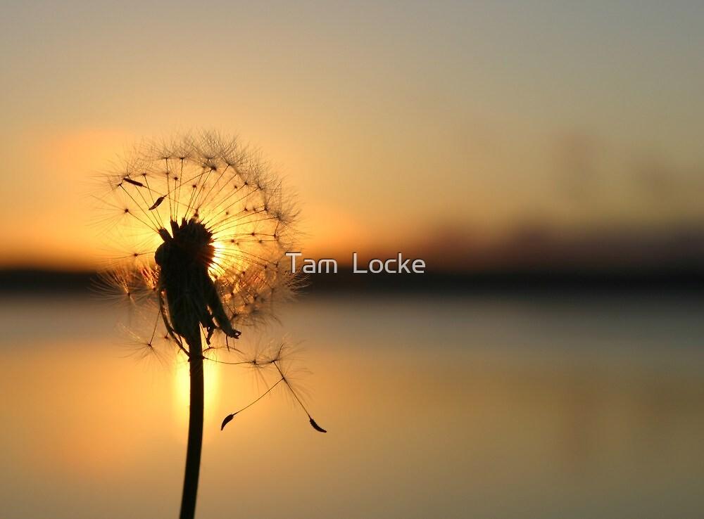 Lets Elope.... by Tam  Locke