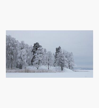 Deep cold trees Photographic Print