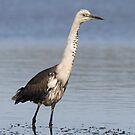 Australian Birds No.2 by Jenni Horsnell