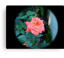 orange rose through tele lens Canvas Print