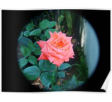 orange rose through tele lens Poster