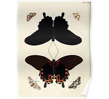 Exotic butterflies of the three parts of the world Pieter Cramer and Caspar Stoll 1782 V2 0306 Poster