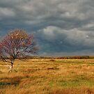 Autumn on the dune polder by Adri  Padmos