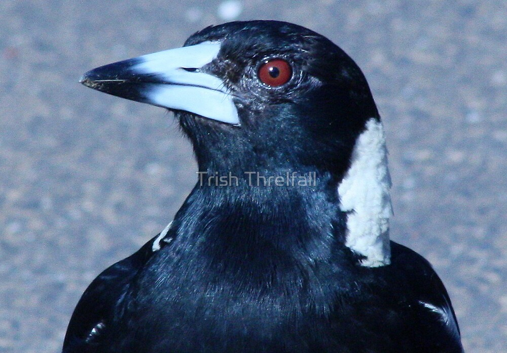 Jacko is that you ?? by Trish Threlfall