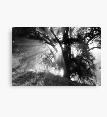Dawn through the trees Canvas Print