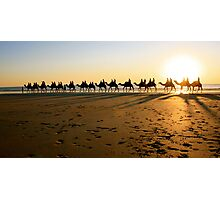 Cable Camels Photographic Print