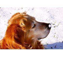Snow nose Photographic Print