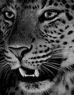 Big Cat II by Louise Fahy
