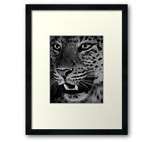 Big Cat II Framed Print