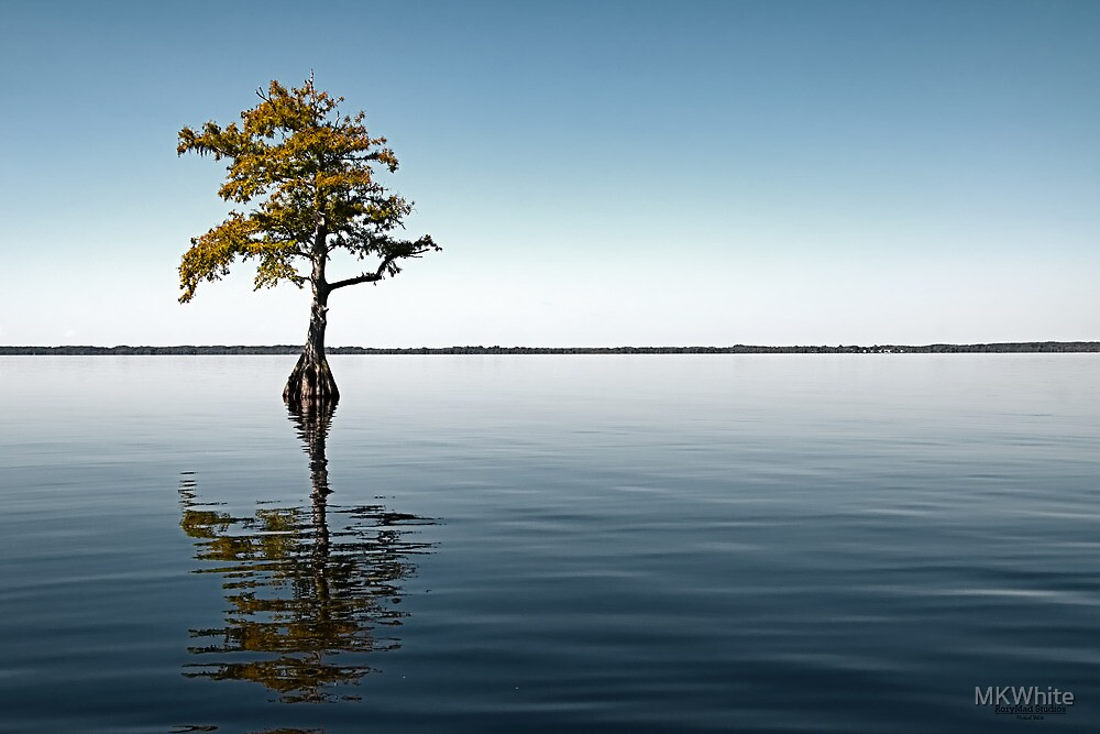 Alone, Blue Cypress Lake Experience (Color Version) by MKWhite
