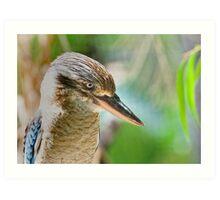 Blue winged kookaburra  Art Print