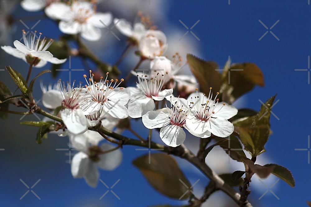 She Blooms in White by Joy Watson