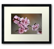 Dainty in Pink Framed Print