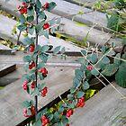 Red Berries Walk~ by bunnyfaye