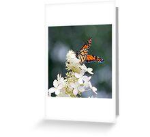 Monarch on a Hydrangea, Bonnechere River, Ontario Greeting Card