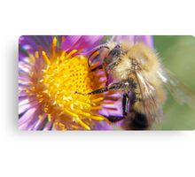 Bumble Bee 1 - Macro Metal Print