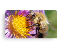 Bumble Bee 1 - Macro Canvas Print