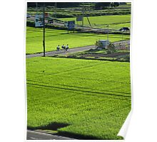 Cycling through rice fields Poster
