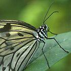 Butterfly1 by Heather-Jayne