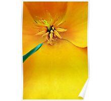 California Golden Poppy Poster