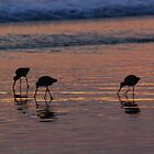 WESTERN WILLITS SUNSET by fsmitchellphoto