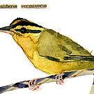 Helmitheros vermivorus (Worm-Eating Warbler) by Carol Kroll