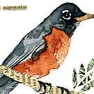 Turdus migratorius (American Robin) by Carol Kroll