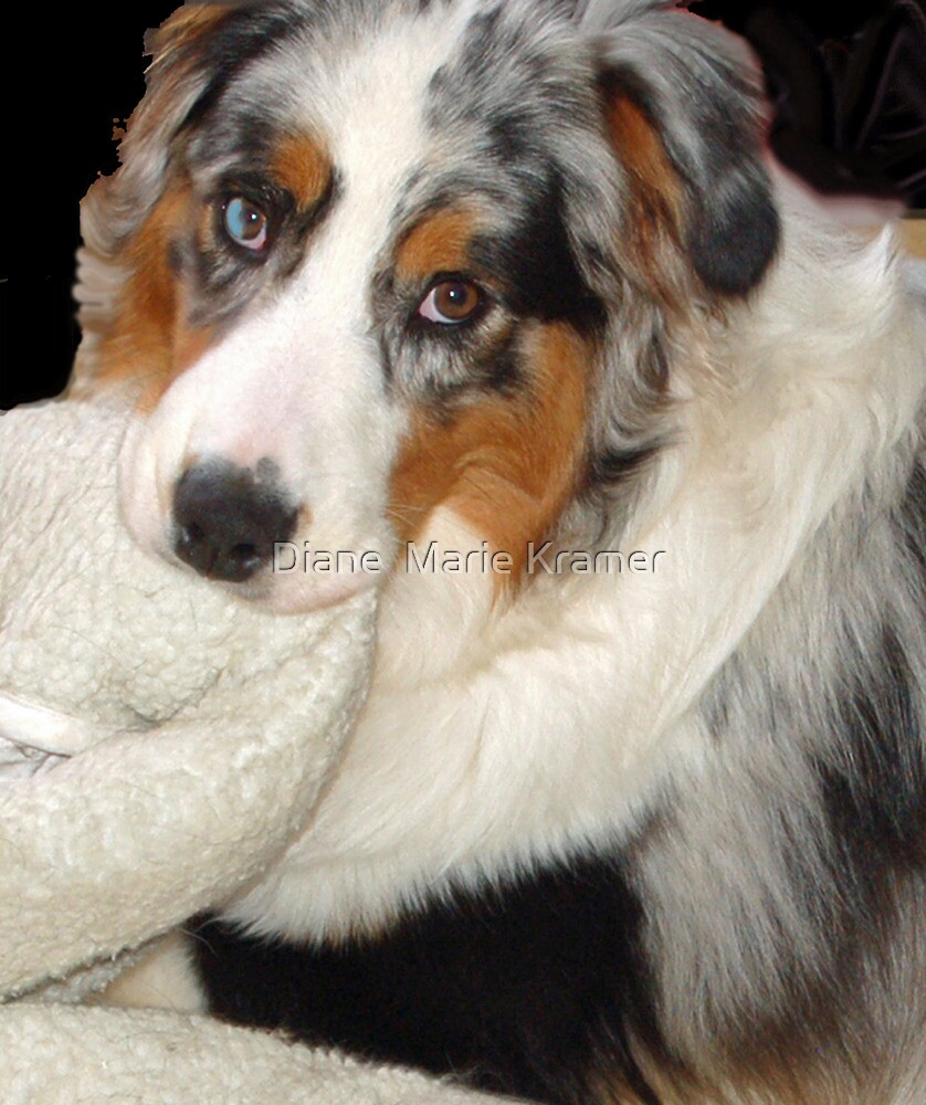 Cezanne Blue and his Blankie by Diane  Kramer