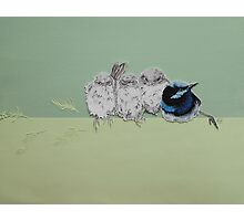 Blue Wrens Photographic Print