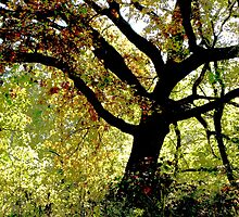 Under The Magic Tree by NatureGreeting Cards ©ccwri
