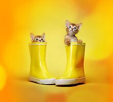 Kittens in boots by Mimootz