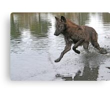 Making a splash, wolf style Canvas Print