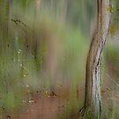 Hypnotic Path  © Vicki Ferrari by Vicki Ferrari