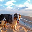 Odin and Cezanne Blue walk Lake Michigan by Diane  Kramer