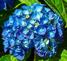 Something In Blue by JoeGeraci