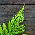 Fern on Wood by Paul Finnegan