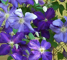 Purple Shades of Clematis by BettyEDuncan